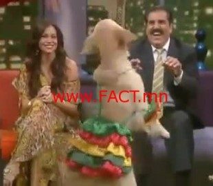 img-amazing-dog-dancing-salsa-543