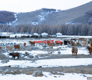 winter-images-of-mongolian-wilderness-12__880